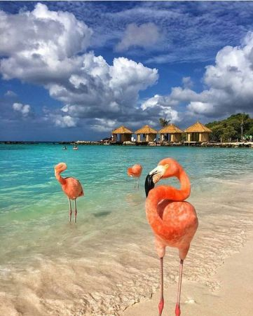 This is one of the most spectacular island destinations! #bestcaribbeanbeachresorts #topcaribbeandestinations #bestplacesinthecaribbean #topcaribbeanislands #caribbeanislandstovisit #bestcaribbeanvacationspots #placesinthecaribbean #famousislands #islanddestinations #getaways #springbreak #winterbreak